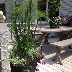 Deck plants