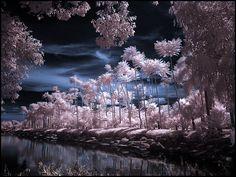 http://fc07.deviantart.net/fs20/f/2007/255/e/7/Tropical_Garden_infrared____by_MichiLauke.jpg