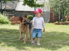 Funny Babies with Funny Dog German Shepherd Videos Funny Pranks Funniest...