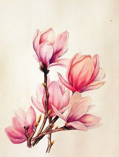 Nice Watercolor Magnolia Tattoo Designs