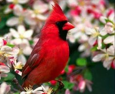 I have prepared a wonderful photo gallery about birds. You can find the most beautiful birds in these photos. Nature birds, wild birds and more are waiting for you. Pretty Birds, Love Birds, Beautiful Birds, Animals Beautiful, Beautiful Creatures, Beautiful Redhead, Exotic Birds, Colorful Birds, Northern Cardinal