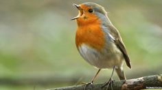 Electromagnetic waves disorientate birds during flight