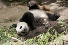Yun Zi gets down and dirty