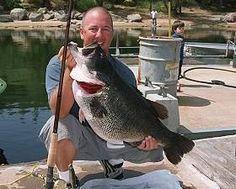 """21.69 lb Cali Bass Lake Dixon """"Dottie"""""""