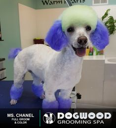 Ms. Chanel is in the house for a Full Groom and Color @ Dogwood Grooming Spa - Knoxville!   Visit our website @ dogwoodgroomingspa.com or Call us at (865) 297-4277 to book an appointment for your pet!  #petcolor #creativegrooming #creativegroomer #petstylist #snowcone #dogwood #dogwoodgroomingspa #petgroomerknoxville #petgroomer #petgrooming #pets #catgroomer #catgrooming #cats #doggrooming #deshedding #doggroomer #dogs #cityspotz #knoxville