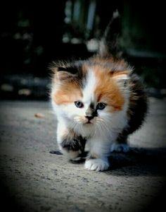 Isn't he adorable!