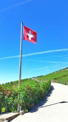 Die Weinreben im UNESCO Welterbe Lavaux bei Montreux am Genfersee  (c) montreuxriviera.com / Lionel