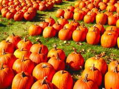 fall pictures michigan - Google Search##
