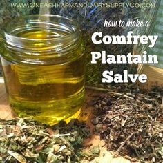 How to make a simple comfrey plantain salve - good for people or critters!: