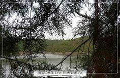 Herdade das Templárias. En las proximidades se distingue naturalmente la Albufera de Castelo de Bode. Natural, Portugal, Homestead, Castle, Nature, Au Natural