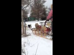 The Door County Sled Dogs - Coming Home.