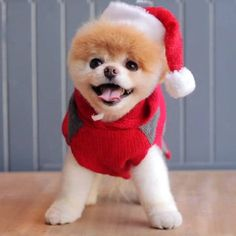Top 10 Cutest Small Dog Breeds Cute Pomeranian Puppies