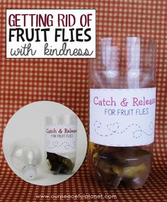 how to get rid of fruit flies fast passion fruit tea