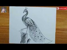 Cool Easy Drawings, Easy Drawing Steps, Basic Drawing, Step By Step Drawing, Drawing For Kids, Painting For Kids, Painting & Drawing, Peacock Sketch, Peacock Drawing
