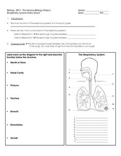 Identify Cause And Effect Worksheet Pdf Gcse Digestion Topic Resource Pack Updated  Worksheets Teaching  Writing Similes And Metaphors Worksheet Excel with Problem Solving Worksheets For Grade 1 Human Respiratory System Worksheet  Algebra Practice Worksheet Pdf