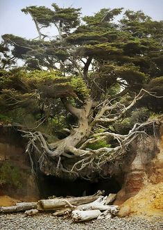 Tree growing on the side of a cliff.