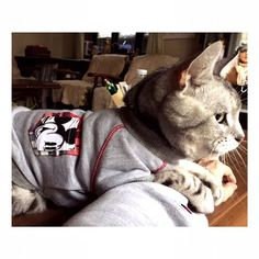 🐈ツンデレ鉄之助 . . 何故か? 今日は、ベタベタ 😻 キッと、寒いんだね〜😿 お陰で、嬉しいー 😽💕🤗 . . #micky #トレーナーコーデ #グレーお揃い 😘 #猫ゆたんぽ 😻 #嬉しいな 🎶 #鉄之助A #血尿予防 #phケア と #13歳 からの #缶詰め #おやつ #ささみ #大好き #愛猫 #ねこばか部 #いつまでも元気でいてね 😽🐾 #ふわもこ部 #かわいいニャンコ #cat #cats #nyanko #ciao #royalcanin