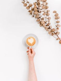 Minimalism By Sincerely Media | 100+ best free plant, grey, pottery and leaf photos on Unsplash Hipster Pictures, Food Flatlay, Low Light Plants, Inside Plants, Coffee Photos, Free Plants, Heather White, 3d Max