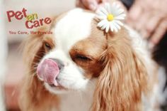 Sweet Good morning Wishes from Ely .. Visit Our Website For Online Shopping of Pet Products - www.petencare.com