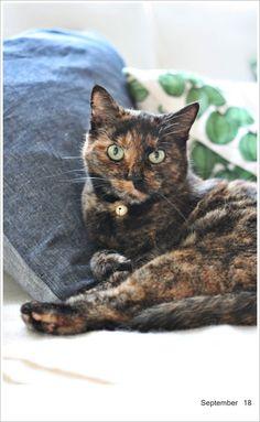 tortie cat love she is very sweet
