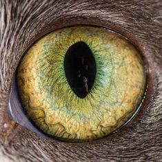 Cat Eyes | Bored Panda