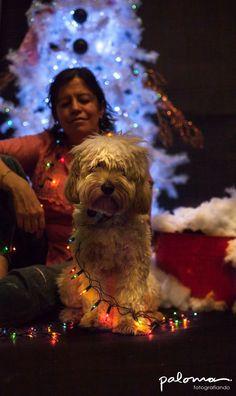 christamas dog, luces de navidad