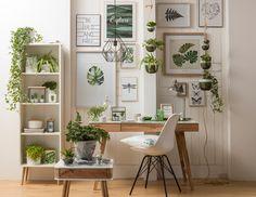 Viele #Ideen für deinen eigenen kleinen #UrbanJungle Zuhause! Buy Indoor Plants, Indoor Bonsai, Bonsai Plants, Jasmine Plant, Pepper Plants, Farm Fence, Newcastle, Houseplants, Sweet Home
