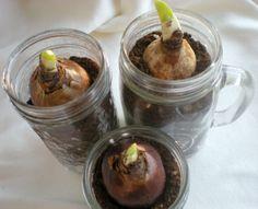 Bulbs in jars