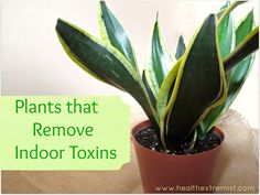 Indoor plants that clean the air