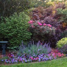 Petunias, verbena, nepeta (catmint), feverfew, purple salvia just before sunset.