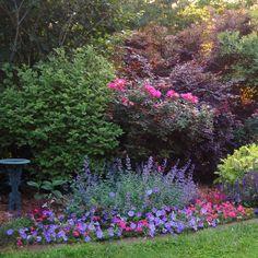 Purple wave petunias, pink verbena, nepeta (catmint), and, purple salvia border