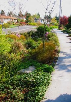 Parking strip plant selection, layout and drainage for natural stormwater treatment
