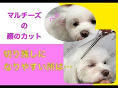 Dogs, Youtube, Animals, Poodle, Animaux, Doggies, Animal, Animales, Pet Dogs