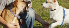 How to Calm an Aggressive Dog (Top Aggression Training Tips) Basic Dog Training, Training Dogs, Training Schedule, Easiest Dogs To Train, Dog Facts, Aggressive Dog, Dog Fighting, Dog Park, Dog Behavior