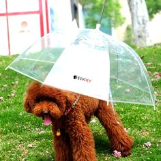 Keep your furbaby dry even when the heavens cry with this pet umbrella. Check it out==> http://gwyl.io/pet-umbrella/