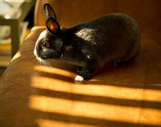 Bunny Examines the Sofa for the Best Place to Sit - November 27, 2011