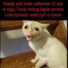 Russian is hard Very Funny Memes, Got Memes, Wtf Funny, Funny Cats, Funny Shit, Baby Animals, Funny Animals, Cute Animals, Polish Memes