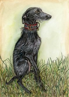 Those Little Wispy Whiskers  Hairy Lurcher Dog by AlmostAnAngel66, £15.00