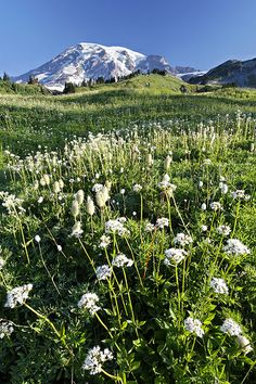 LM403+-+Mount+Rainier+above+meadow,+Edith+Creek,+Mount+Rainier+National+Park,+Washington,+USA