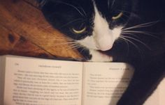 Barnes and Noble: The Best Names from Literature to Give to Your Cat