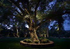 Kichler Landscape Tree Reach