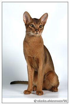 Google Afbeeldingen resultaat voor http://www.des-cavalier.ru/trisha/Cat-As-Trophe-Des-Fusains.jpg