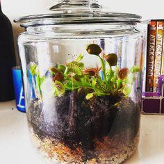 My new venus fly trap terrarium #venusflytrap #terrarium #venusflytapterrarium…