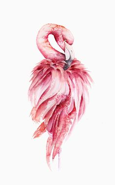 Flamingo Painting, Flamingo Art, Pink Flamingos, Watercolor Bird, Watercolor Paintings, Flamingo Wallpaper, Bird Artwork, Bird Drawings, Paintings For Sale