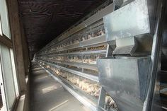 ★CONNECT Poultry Farm Equipment☆-Cage