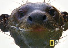 Nat Geo te acerca las criaturas más extraordinarias del planeta. Amazonas Salvaje. #NatGeo Mira contenido exclusivo en http://www.foxplay.com/natgeo
