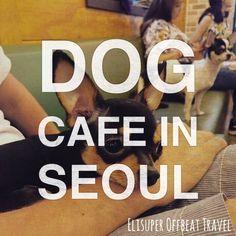 Bau House Dog Cafe In Seoul | Elisuper Offbeat Travel - http://www.elisuperoffbeattravel.com/2015/06/korea-offbeat-bau-house-dog-cafe/