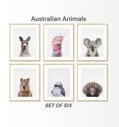 ideas baby bedroom nursery animal prints for 2019 Baby Prints, Nursery Prints, Nursery Wall Art, Bedroom Wall, Australian Nursery, Australian Animals, Cabana, Baby Koala, Baby Baby