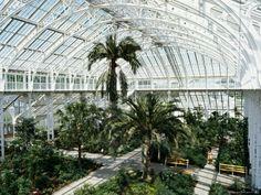 ashworth-richard-interior-of-the-temperate-house-restored-in-1982-kew-gardens-greater-london.jpg (400×300)