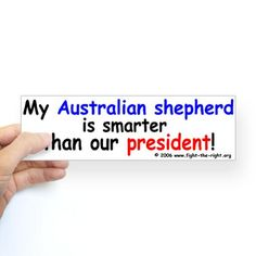 I don't have an Aussie but I know for fact that they are smarter... ;)